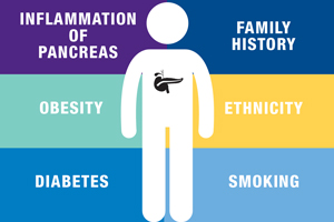 About the Pancreas - Hirshberg Foundation for Pancreatic